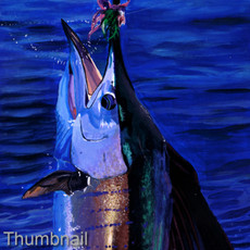 Shimmer (Sailfish)
