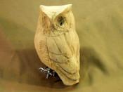 Roughout - Screech Owl