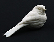 Study Cast - Chickadee