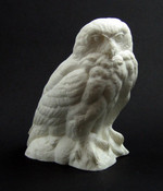Study Cast - Owl, Snowy