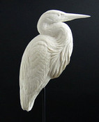 Study Cast - Heron, Great Blue