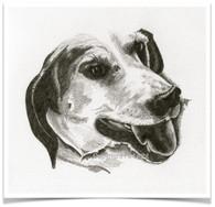 Dogs I've Loved Portrait 3