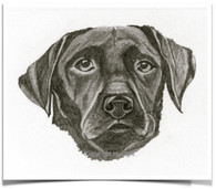 Dogs I've Loved Portrait 5