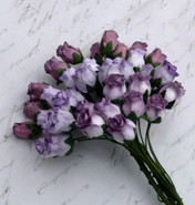 WOC - Hip Rosebuds (40) - Mixed Purple/Lilac Tone