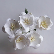 WOC - Cherry Blossoms (5) - White