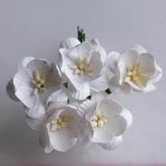 WOC - Cherry Blossoms (5) - White