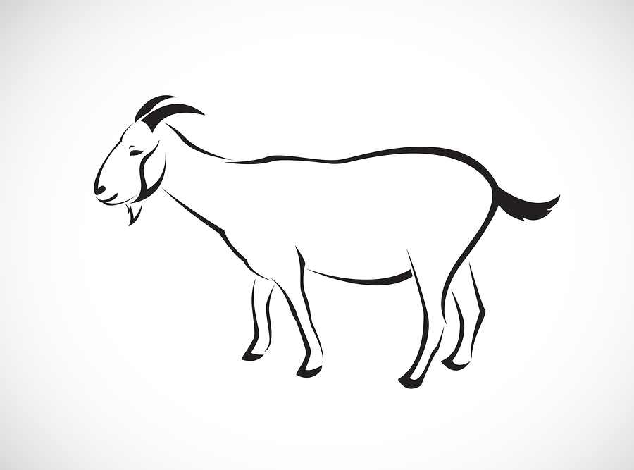 bigstock-vector-image-of-an-goat-73727842.jpg