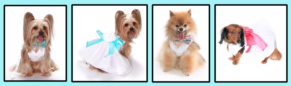 special-occasion-dresses-copy.jpg