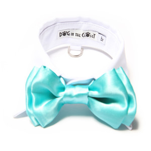 White shirt collar with aqua blue blow tie.
