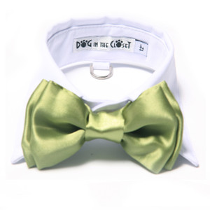 White shirt collar with apple green bow tie.