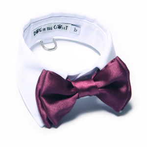 White shirt collar with purple bow tie.