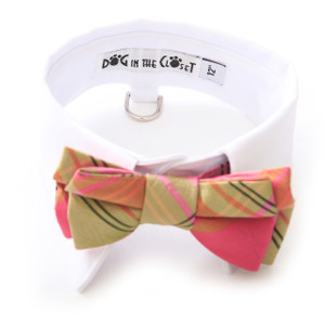 White cotton shirt collar and coral and lime silk bow tie.