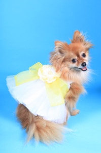 The Madeleine Harness Dog Dress with Yellow Sash