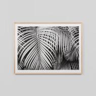 Framed Print: Black And White Palms