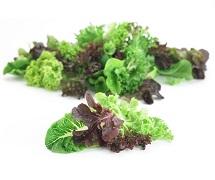 lettuce-blend-category.jpg