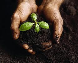 soilseeds.jpg