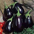 Black Beauty Eggplant Seed