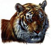 Tiger Head T-shirt - Imprinted Tiger Head