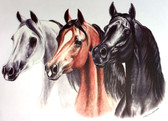Three Arabians