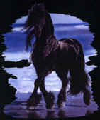 The Beachcomber Friesian
