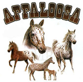 Appaloosa T-shirt - Imprinted Appaloosa