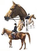Hunter Jumper T-shirt - Imprinted Horse Hunt Seat