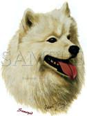 Samoyed T-shirt - Imprinted Samoyed Head