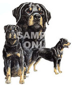 Rottweiler T-shirt - Imprinted Three Rottweiler Collage
