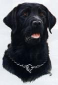 Black Labrador Retriever T-shirt - Imprinted Black Labrador Retriever Head