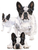 French Bulldog T-shirt - Imprinted French Bulldog Collage