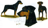 Doberman Pinscher T-shirt - Imprinted Doberman Collage