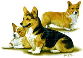 Corgi T-shirt - Imprinted Corgi Collage