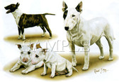 Bull Terrier T-shirt - Imprinted Bull Terrier Collage