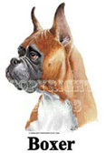 Boxer T-shirt - Imprinted Fawn Boxer