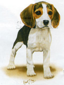 Beagle T-shirt - Imprinted Beagle Puppy