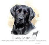 Black Labrador Retriever T-shirt - Imprinted Black Labrador Retriever