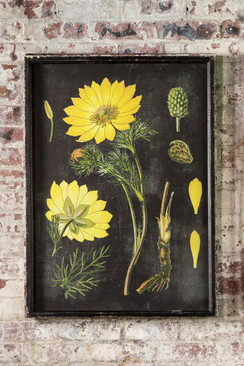Wood Framed Vintage Botanical Print with Glass Front - II
