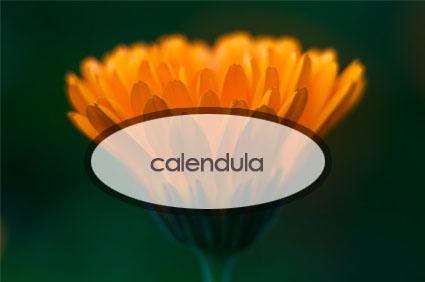 calendula.the-good-stuff-botanicals.jpg