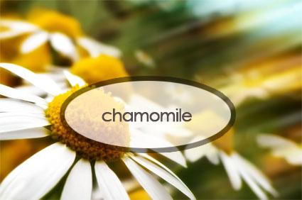 chamomile.the-good-stuff-botanicals.jpg