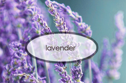 lavender.the-good-stuff-botnaicals.jpg