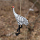 Standing Whooping Crane