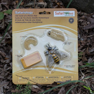 Life Cycle Bee