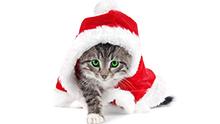 cute-kitten-shrunk-for-website-2.jpg