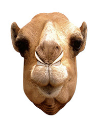 Camel Animal Card Party Face Mask