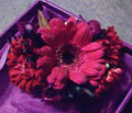 Berry Bliss Wrist Corsage Gerbera focal