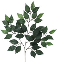 "32"" Ficus Spray, 12 pack"