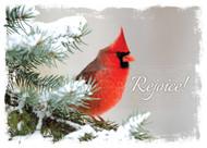 KJV Boxed Cards - Christmas, Nature Sings