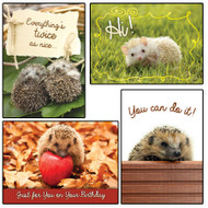 KJV Boxed Cards - All Occasion, Lovable Hedgies