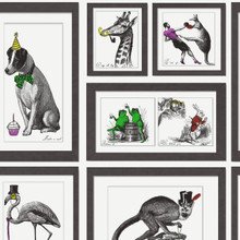 human animals black and white frames wallpapers