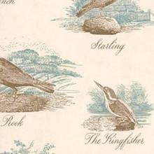 Bewick Birds